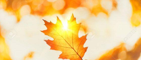 88442438-toile-de-fond-automne-personne-tenue-automne-feuille-à-rayon-soleil-sur-arrière-plan-flou-automne